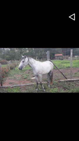 Cavalo Minero  - Foto 5