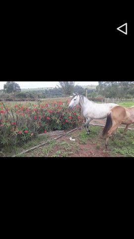 Cavalo Minero  - Foto 4
