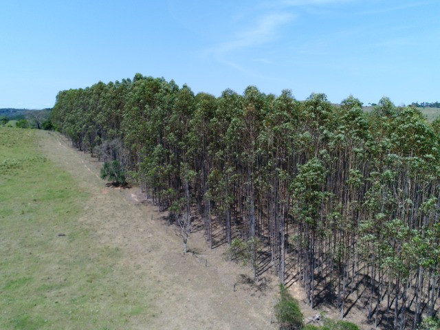 Área com eucalipto - 34,3907ha plantado (14 alqueires)- Itararé/SP - Foto 2