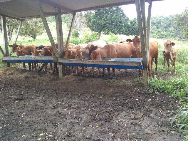Vendo excelente fazenda Presidente tranquedo Neves  - Foto 5