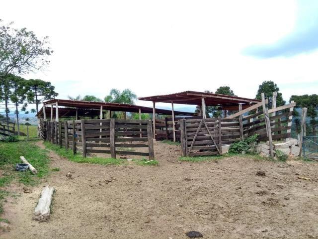 Chácara à venda em Sao silvestre, Campo largo cod:CH00001 - Foto 3