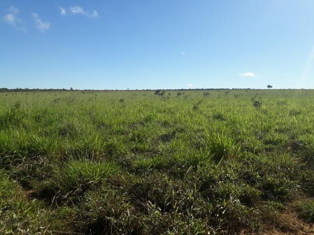 Fazenda com 784,77 hectares entre Jangada e Rosário Oeste - Foto 9