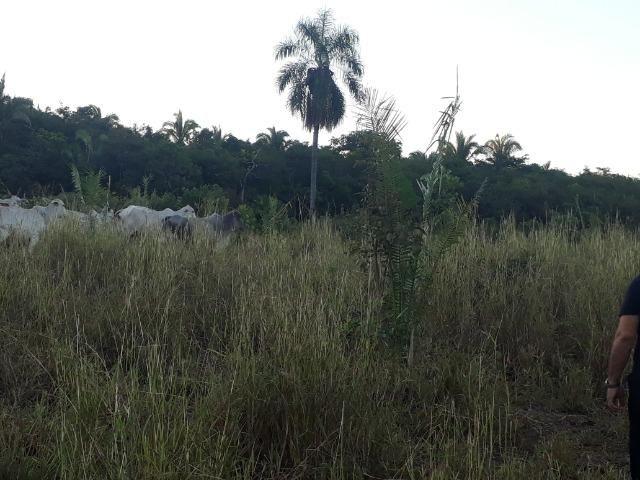 Chácara com 38.2 Hect em Acorizal - Foto 3