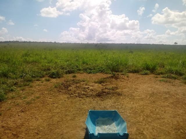 Fazenda com 784,77 hectares entre Jangada e Rosário Oeste - Foto 2