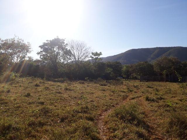 Fazenda 866 Hectares apos 35 km da Agrovila das Palmeiras - Foto 6