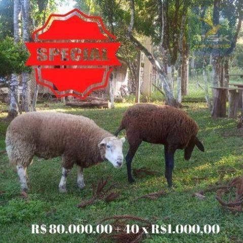 CH0386 - Chácara à venda, 6050 m² por R$ 130.000 - Zona Rural - Quitandinha/PR