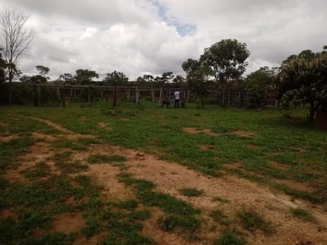 Fazenda 90 alqueires - Foto 3