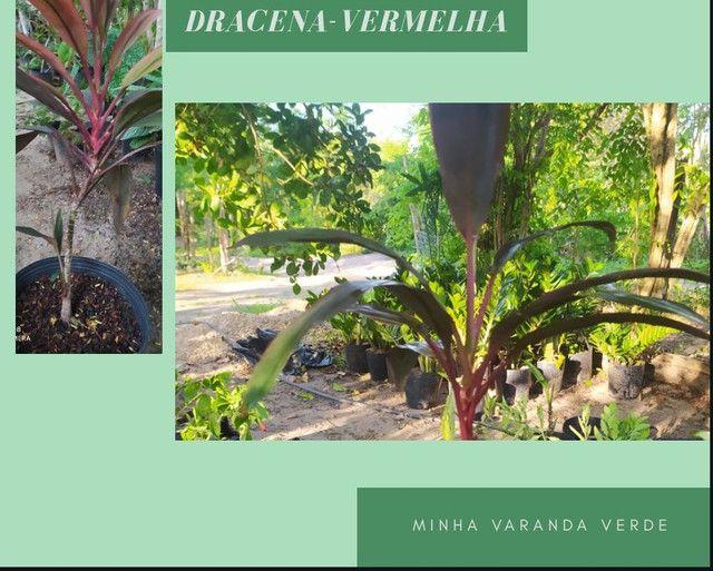 Plantas ornamentais  - Foto 5