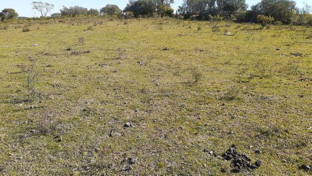 R- 394 Vendo Belíssima propriedade de 50 hectares próximo a Pedro Osório - Foto 14