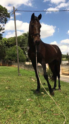 Cavalo manga larga marcha pikada 7000 - Foto 2