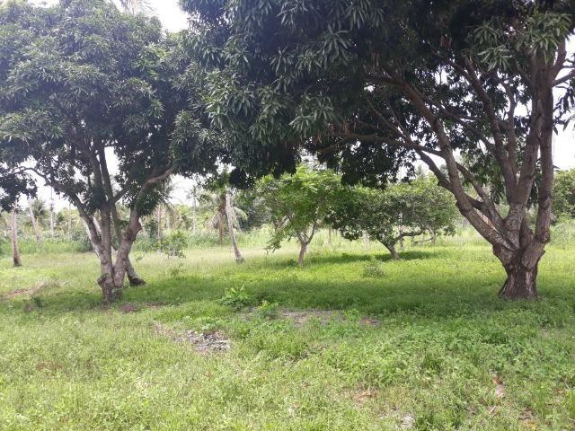 Oportunidade de Chácara, com 5,2 ha, há margem da RN 316, em Monte Alegre/RN - Foto 7