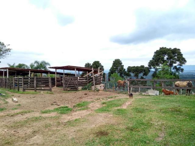 Chácara à venda em Sao silvestre, Campo largo cod:CH00001 - Foto 7