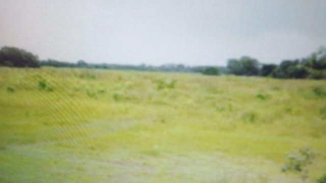 Fazenda de 87.945 hectares, em pocone no pantanal Mato-Grossense ! - Foto 3
