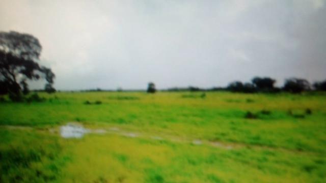 Fazenda de 87.945 hectares, em pocone no pantanal Mato-Grossense ! - Foto 6