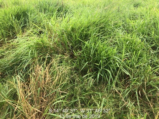 750 Hectares Pecuária de patrão em Mato Grosso-MT - Foto 4