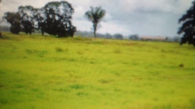 Fazenda de 87.945 hectares, em pocone no pantanal Mato-Grossense ! - Foto 9