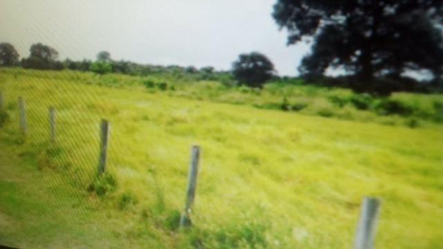 Fazenda de 87.945 hectares, em pocone no pantanal Mato-Grossense ! - Foto 10