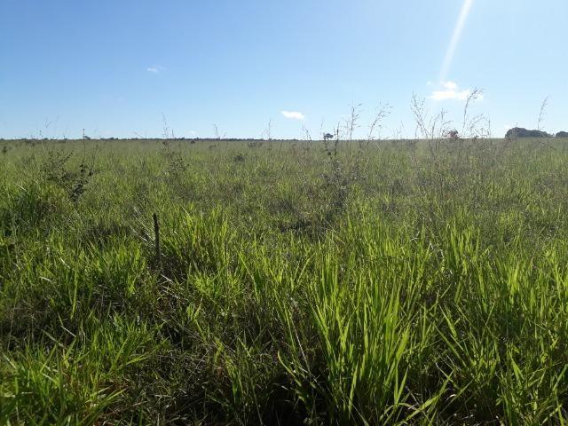 Fazenda com 784,77 hectares entre Jangada e Rosário Oeste - Foto 10