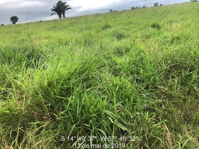750 Hectares Pecuária de patrão em Mato Grosso-MT - Foto 5