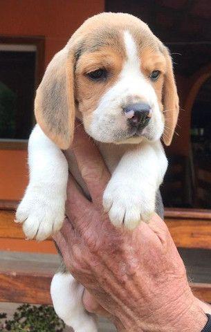 Beagle Mine/ @canilcanaa/ CE