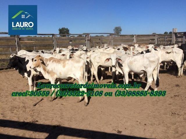Fazenda com 9.800 hectares em Montalvânia MG