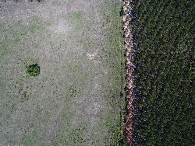 Área com eucalipto - 34,3907ha plantado (14 alqueires)- Itararé/SP - Foto 4