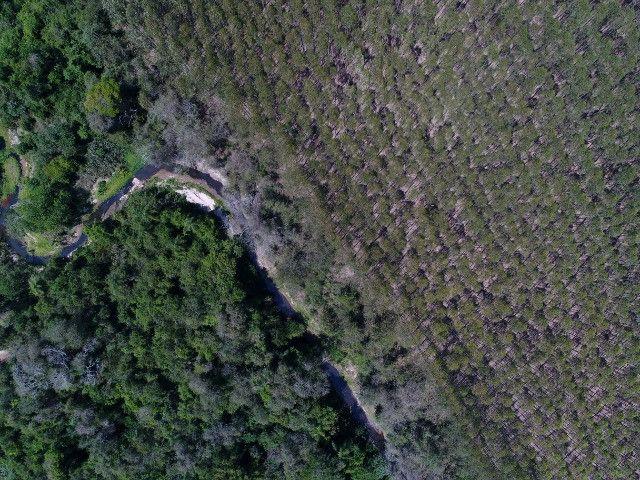 Área com eucalipto - 34,3907ha plantado (14 alqueires)- Itararé/SP - Foto 9