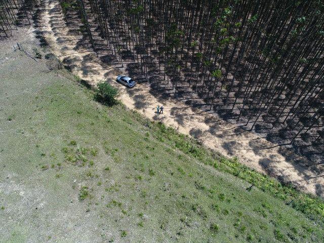 Área com eucalipto - 34,3907ha plantado (14 alqueires)- Itararé/SP - Foto 5