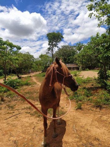 Vendo cavalo - Foto 4