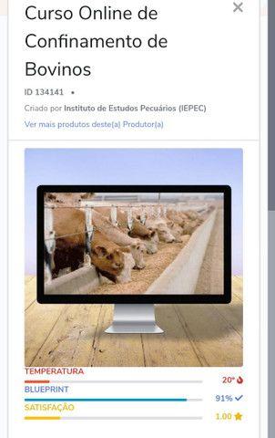 Curso online para confinamento de bovinos