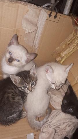 Doando estes gatinhos