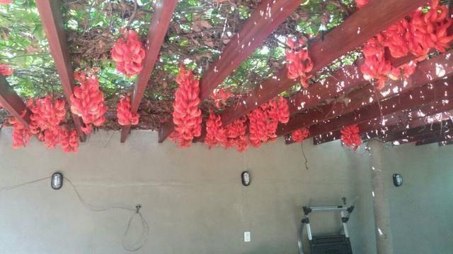 Chácara à venda terreno com 3000m² na Cidade Vera Cruz - Foto 19