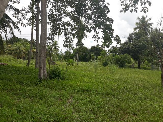 Oportunidade de Chácara, com 5,2 ha, há margem da RN 316, em Monte Alegre/RN - Foto 13