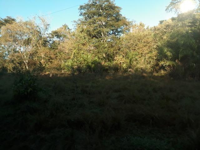 Fazenda 866 Hectares apos 35 km da Agrovila das Palmeiras - Foto 5