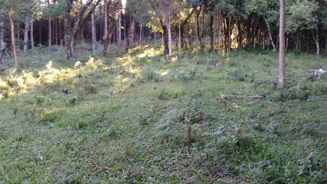 Terreno no interiorde caxias do sul proximo canion palanquinho