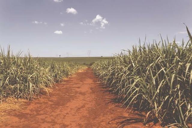 Fazenda Arrendamento PR 675 há de Soja.e.milho - Foto 3