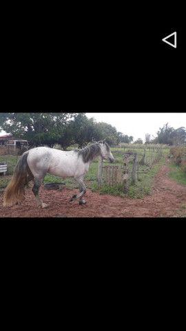 Cavalo Minero
