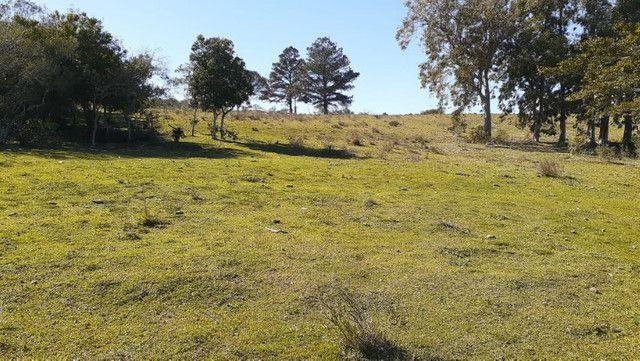 R- 394 Vendo Belíssima propriedade de 50 hectares próximo a Pedro Osório - Foto 5