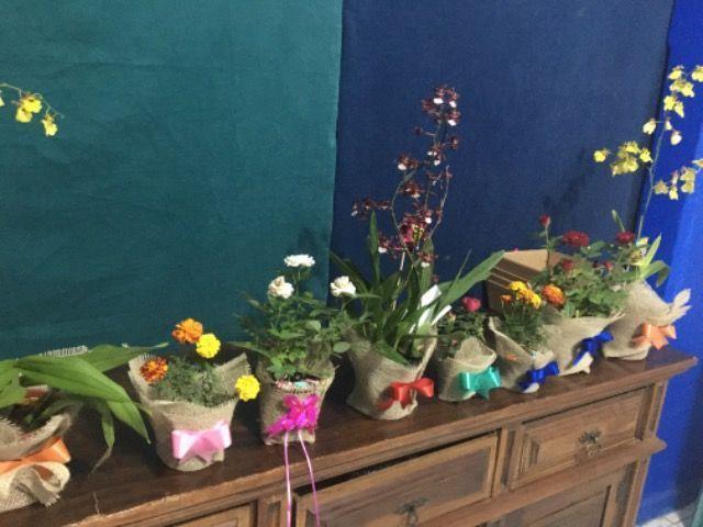 Plantas e terrarios - Foto 2