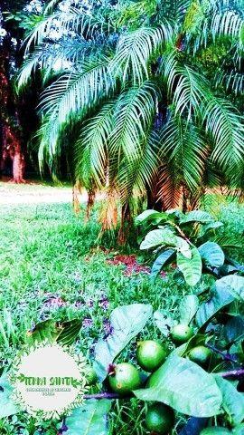 Venda pedaço do paraíso em Morretes próximo BR 277 - Foto 7