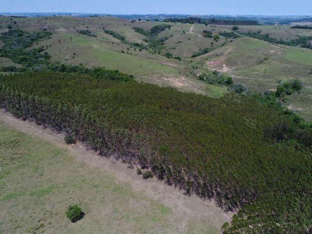 Área com eucalipto - 34,3907ha plantado (14 alqueires)- Itararé/SP - Foto 3