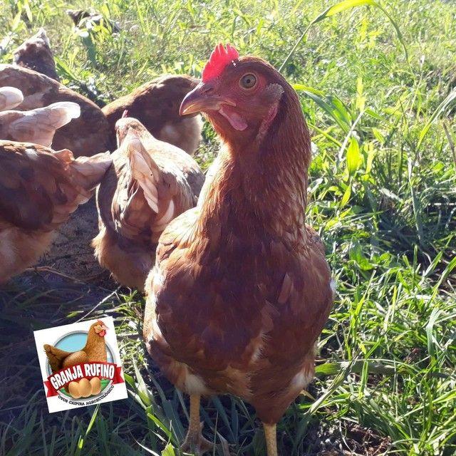 Ovos caipira agroecológico  - Foto 2