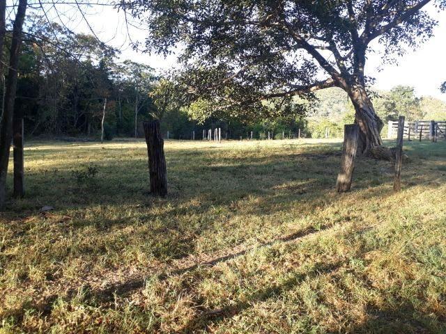 Fazenda 866 Hectares apos 35 km da Agrovila das Palmeiras - Foto 18