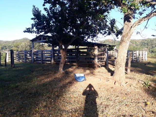 Fazenda 866 Hectares apos 35 km da Agrovila das Palmeiras - Foto 12
