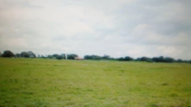 Fazenda de 87.945 hectares, em pocone no pantanal Mato-Grossense ! - Foto 2