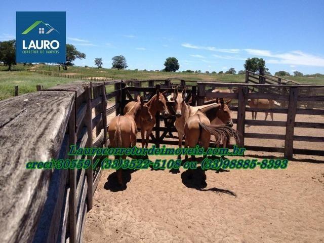Fazenda com 9.800 hectares em Montalvânia MG - Foto 15