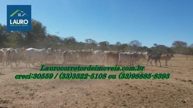 Fazenda com 9.800 hectares em Montalvânia MG - Foto 6