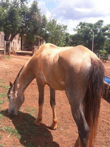 2 animais 1 egua e 1 cavalo  - Foto 5