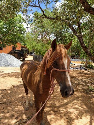 Vendo cavalo - Foto 6