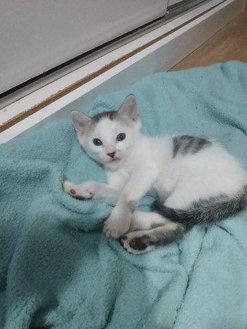 Filhote de gato para adoção!